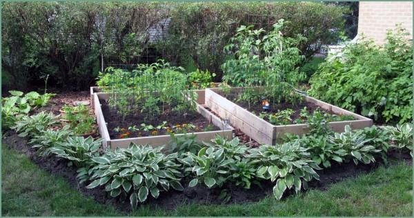 Garden 27 June 2009