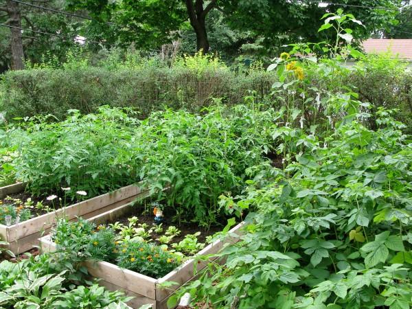 garden20090724_02
